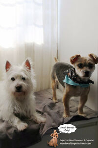 CAGE-FREE HOME BOARDING FOR SMALL DOGS West Island Greater Montréal image 2