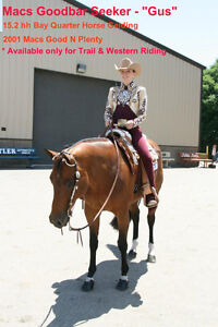 Macs Goodbar Seeker AQHA Gelding - For Lease