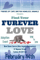Adoption Drive - Friends of Cape Breton's Homeless Animals