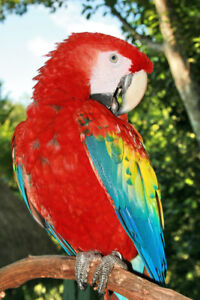 Looking for  a Macaw for Educational shows.