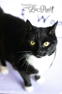 Phoebe looking for a new home