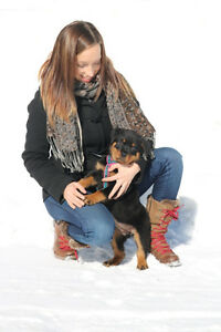DOG AND PUPPY TRAINING, BEHAVIOUR CONSULTATIONS IN HUNTSVILLE