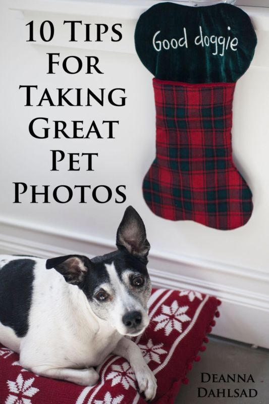 Holiday Photos Of Pets Are Cool!