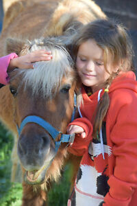 Beautiful Quality Fall Portraits With Ponies/Baby Goat/Bunnies