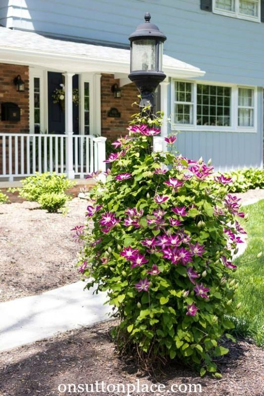 Must-Have Perennials: Clematis