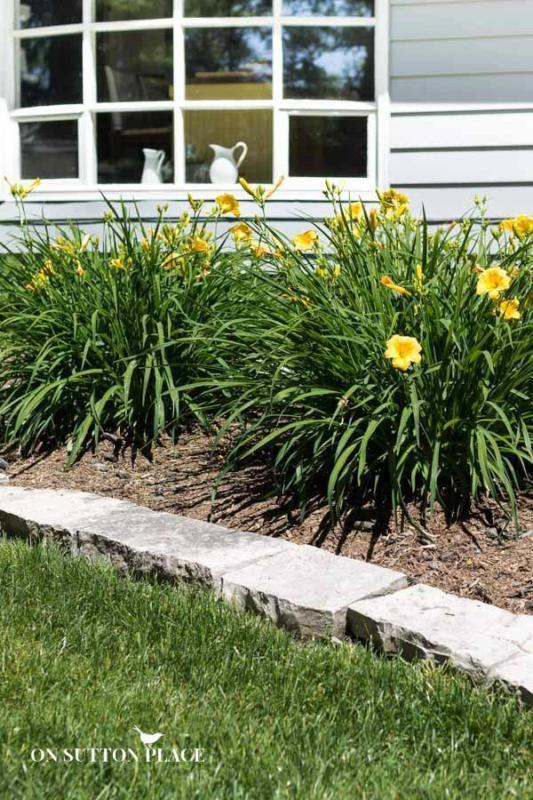 Must-Have Perennials: Daylily