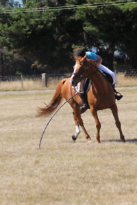 Tilly TB Mare Mole Creek Meander Valley Preview