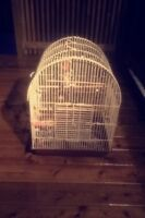 Large bird cage for cockatiel
