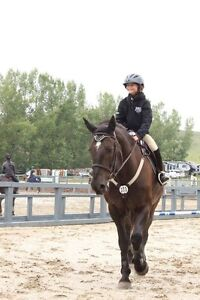Horse Back Riding Lessons - School Ponies Available