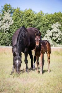 2019 Colt AQHA PENDING - Cowhorse Prospect Deluxe