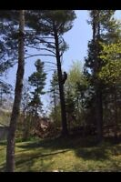 Tree & limb removal, stump grinding, chipping, insured