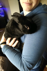 Bunny for rehoming!