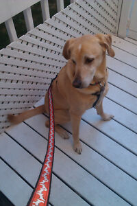 Dog Walking Courtice Area