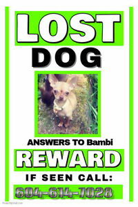 Lost/Stolen?? Large REWARD!!!!!!!!!