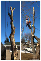 Tree cutting and removal-cheapest call you'll make(Free quote)