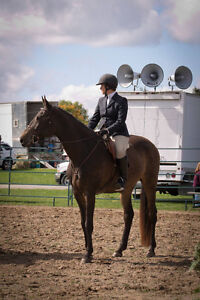 Horse available for part-board or full lease