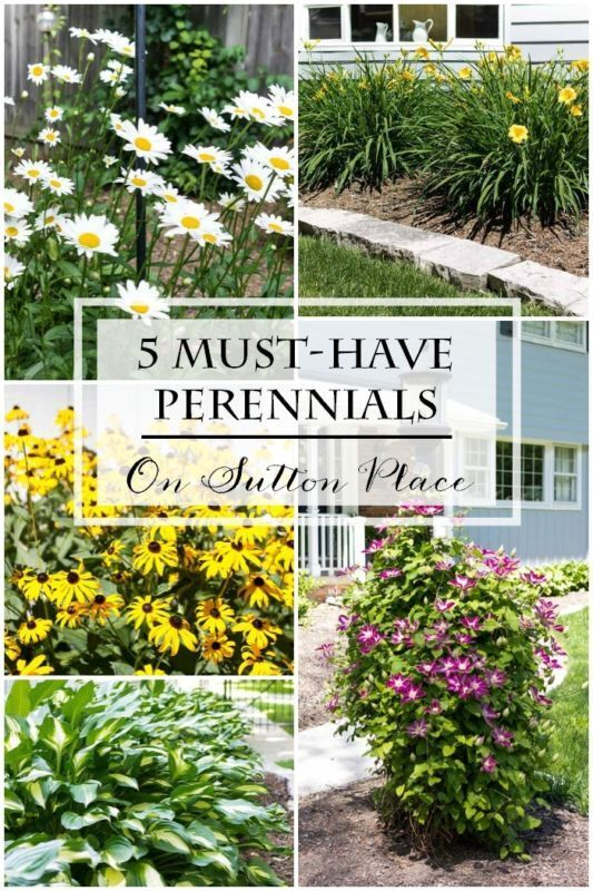 5 Must-Have Perennials | An eBay guide from On Sutton Place