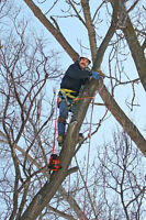 JP PROFESSIONAL TREE SERVICES