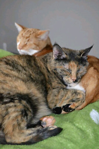ZOEY AND PEACHES CUDDLE BUDDIES.  CAN BE ADOPTED SEPARATELY