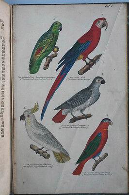 Bechstein, J.M.: Naturgeschichte der Stubenvögel, 1840