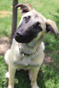 Daky, a sweet dog and great with cats!