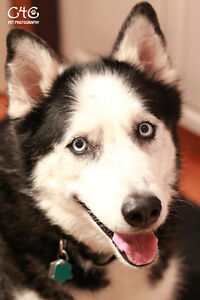 Quality DOG SITTING - Care 4 Creatures (NW Calgary)