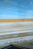 Wheat, durum, barley, oat or canary straw wanted to bale!