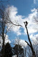 Free Estimates - Tree Services