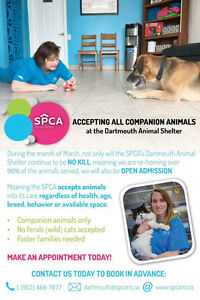 Dartmouth spca will accept all friendly animals during March
