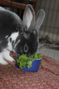 Professional Licensed Small Pet Boarding (bunnies, guinea pigs)