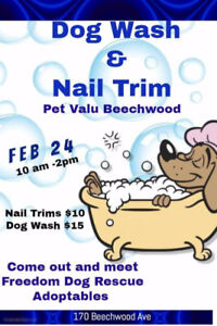 Do it yourself dog wash adopt or rehome pets in ontario kijiji dog wash and nail trim fundraiser and adoption event solutioingenieria Gallery