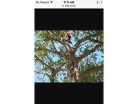Meridian tree & garden services