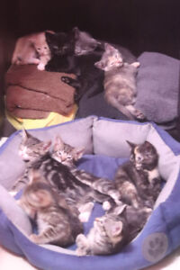 Too many Kittens,  Need to rehome some