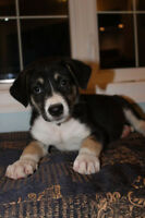 PUPPY FOSTERS NEEDED