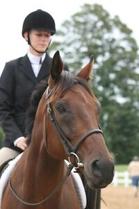 Loving home offerred for a free OTTB