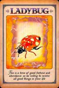 Animal Spirit Guide Oracle Card Reading! Windsor Region Ontario image 2
