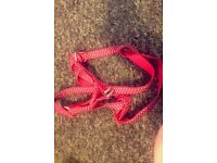 Free training lead and a dog harness