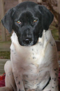Jelly is a 1 year old, female, lab mix.