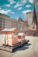 Adjoint(e) à l'administration-- Alvéole-- apiculture urbaine