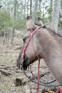 Horse and pony tack for sale