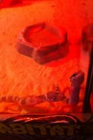 2 leopard geckos with tank and everything.