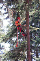 *Tree Removal - Lumberjack Clearing*