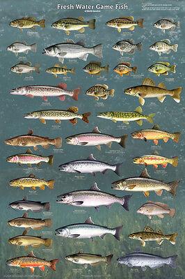 Fresh Water Game Fish Poster Print, 24x36