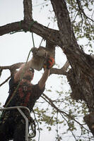 Certified Arborists, tree removals, stump grinding and pruning.
