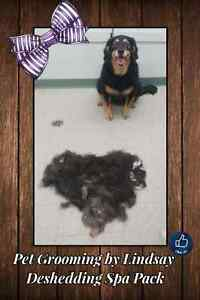 January Special ! Professional dog and cat grooming  Cambridge Kitchener Area image 6