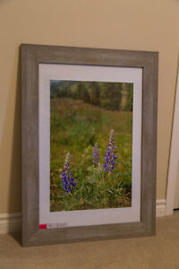 Twin Lakes Lupins -Framed Print by Drew Desharnais Photography