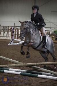 lease horses for kids/adults that want to improve