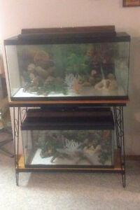 Pond Fish & 2 Tanks with Stand