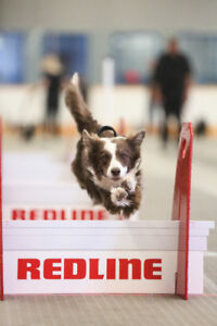 Flyball Classes