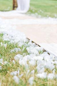Fake white (and some cream) rose petals for sale Cambridge Kitchener Area image 2